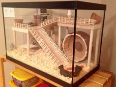 DIY Hamster House Hey Pet Parents and Hamster Lovers. Do you want to build a great hamster house for your hammy, but you do not have the DIY skills to … How To Make A Durable, but Cheap Hamster house READ Hamster Tank, Hamster Life, Syrian Hamster, Hamster Stuff, Diy Hamster House, Hamster Diy Cage, Gerbil Cages, Pet Cage, Chinchilla