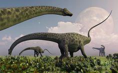A herd of Diplodocus...