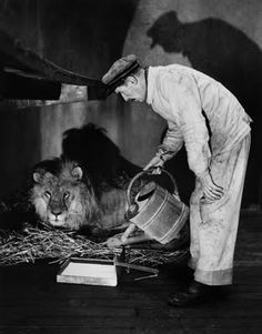 big Lion getting a rather shallow water dish refilled looks like - Robert Doisneau