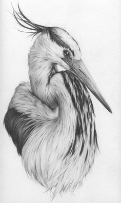 Portfolio of bird art by Vanessa Foley Bird Pencil Drawing, Pencil Drawings Of Animals, Animal Sketches, Bird Drawings, Cool Drawings, Drawing Sketches, Drawing Birds, Drawing Ideas, Drawing Animals