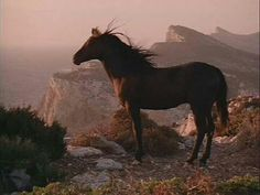 Horse standing in the wind at edge of cliff. Majestic! #horses