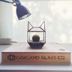 Cat terrarium | oaklandglassco