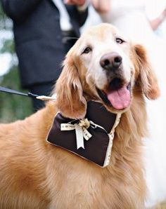 weddings with dogs! burbs will def be in mine!