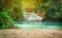 Download wallpapers tropical forest, waterfall, lake, creepers, fern