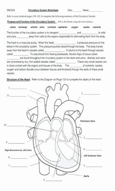 6 United States Worksheets Grade Interesting Fifth Grade Science Circulatory System Also √ United States Worksheets Grade . Interesting Fifth Grade Science Circulatory System Also in Science Worksheets, Worksheets For Kids, Printable Worksheets, Spelling Worksheets, Comprehension Worksheets, School Worksheets, Free Printable, Circulatory System For Kids, Heart Diagram