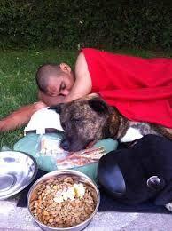 Afbeeldingsresultaat voor homeless dogs