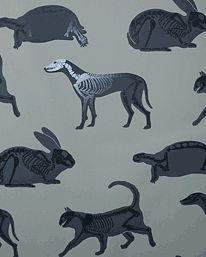 Animal Skeleton Wallpaper