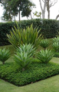 Low Water Landscaping, Florida Landscaping, Tropical Landscaping, Landscaping Plants, Tropical Garden, Front Yard Landscaping, Front Garden Landscape, Landscape Design, Garden Design