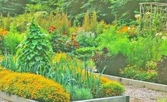 Organic Herb Garden and Herb Garden Care to Protect Your Vegetables