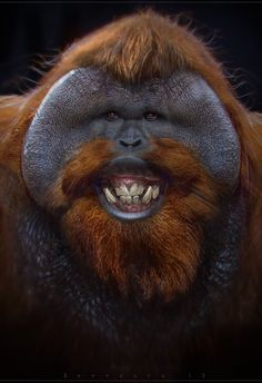 My teeth are whiter, brighter now after the treatments!  Aren't I pretty?   Happy orangutan ✿⊱╮