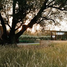 Stone Edge Farm / Sonoma, CA, 2007 Architect: STUDIOS; landscape: Andrea Cochran;photography: Marion Brenner, Vicky Sambunaris, Emily Rylander Built from the native alluvial stones un-earthed during construction, a 100 foot long The site is located within 3.5 acres on an alluvial plain, marked by several ancient California bay trees, oaks and buckeyes and bordered by a seasonal stream. A drought-tolerant meadow unifies the ground plane.