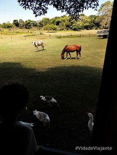 MS Pantanal Fazenda Santa Clara