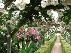 a rose arbour at Mottisfont, a National Trust property in Hampshire, England.