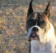 Image result for heaven boxer dog