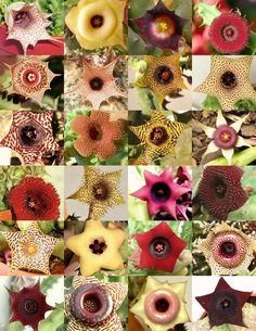 Flores especiales!.