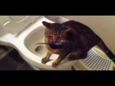Mačka na WC, potkan a mačka