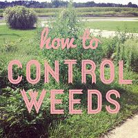 Learn how to Control Weeds & Save Your Sanity! Four keys to keeping weeds from taking over your garden and your mental health.