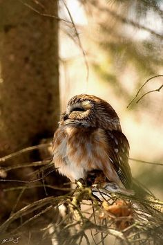 Adorable little owl