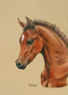 62 Best Horses in Colored Pencil images | Horses, Horse ...