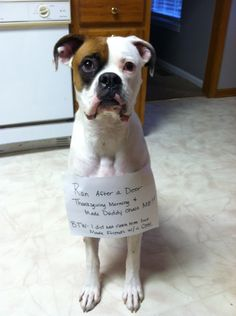 Dog Shame | Ran after a deer thanksgiving morning and made...