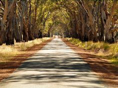 Country Road near Harrow Victoria 3317 South Australia, Sidewalk, Country Roads, Victoria, Camping, World, Campsite, The World, Outdoor Camping