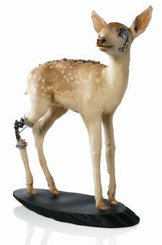 Unconventional Approaches to Taxidermy