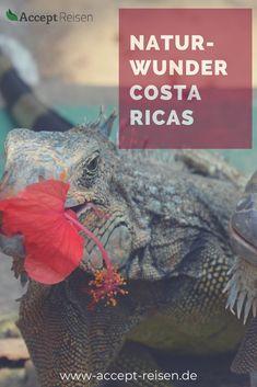 Bei dieser 14-tägigen Costa Rica Rundreise besucht ihr den dampfenden Kratersee am Vulkan Poas, wandert durch tropischen Regenwald und badet in heißen Quellen am Vulkan Arenal. Der Tortuguero Nationalpark mit seiner atemberaubenden Tierwelt wird euch beeindrucken. Anschließend entspannt ihr am Strand zwischen Regenwald und dem Karibischen Meer. Costa Rica Reisen, Holiday Destinations, Travel Destinations, Travel Companies, Group Travel, Where To Go, First World, Strand, Travel Photos