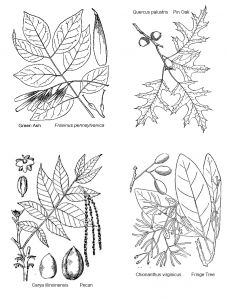 Leaf Anatomy Key Coloring Sheet Coloring Pages
