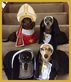 Ha, this made me laugh. Only issue is that my girl dachshund would want to be the Pope. Dachshund Costume, Dachshund Funny, Dachshund Puppies, Dachshund Love, Funny Dogs, Daschund, Dapple Dachshund, Chihuahua Dogs, Funny Animal Pictures