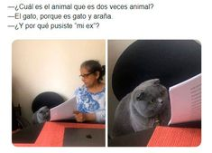 Spanish Jokes, Funny Spanish Memes, Funny Images, Funny Pictures, Friday Meme, Roblox Memes, Bts Chibi, Nurse Humor, Stupid Funny