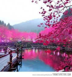 Cherry Blossom Lake