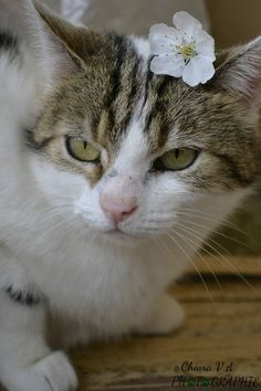 Minette on www.yummypets.com Cat, kitten, kitty, meow, purr, pets, animals, pussycat, tabby cat, flower, Yummypets