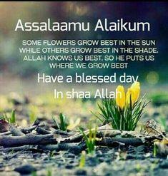 Good Morning Wishes Gif, Happy Good Morning Quotes, Morning Qoutes, Good Day Quotes, Good Morning Images Hd, Good Morning Funny, Good Morning Messages, Islamic Inspirational Quotes, Islamic Quotes