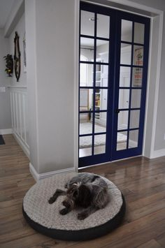 LOVE these colors and doors! The dog isn't the only one who approves of Rachel's new French door color: Salty Dog SW This rich, vibrant blue gives her neutral space the pop of color she wanted while perfectly complementing her Worldly Gray SW 7043 walls. Grey Walls Living Room, Home Living Room, Blue Paint Colors, Room Colors, Worldly Gray, Dog Crate Furniture, Doors And Floors, Grey Houses, Dog Rooms
