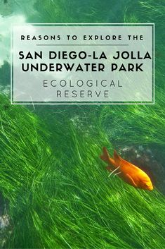 When in San Diego, you must explore the La Jolla Underwater Park ecological reserve. Here's why it's one of the best things to do in La Jolla.