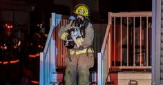 A Cat Bit Her Owner In Her Sleep To Alert And Save The Family From A House Fire https://www.buzzfeed.com/tanyachen/hero-cat  #cat  #cats  #rescue  #kitten