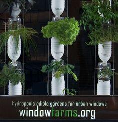 hydroponics :)