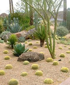 Xeriscape Desert Landscaping Cactus : Desert Landscaping For Your ...
