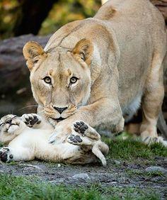 Majesty gets the big one