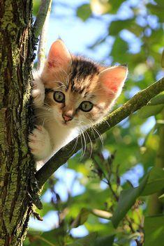 A small cute kitten on the tree #cute #kitten #cat #cuteanimals #TheWorldIsGreat