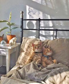 Best of Tabby Cats pictures: I Love Cats, Crazy Cats, Cute Cats, Adorable Kittens, Animals And Pets, Baby Animals, Cute Animals, Animal Gato, Tier Fotos