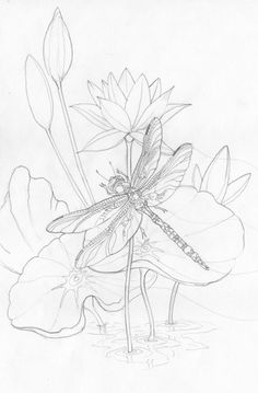 Adult Coloring page - Dragonfly - Amethyst Sunrise - Original Sketch Dragonfly Drawing, Dragonfly Art, Dragonfly Painting, Pencil Drawings, Art Drawings, Coloring Book Pages, Silk Painting, Colorful Pictures, Line Drawing