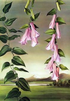 green - flowers - Lapageria rosea    - painting - Paul Jones