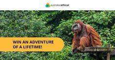 Borneo Orangutan Expedition