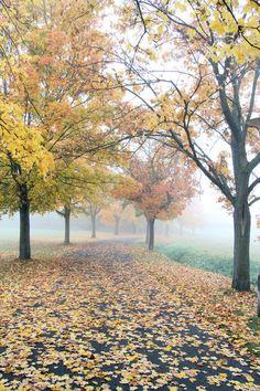 Baumallee im Herbst bei Bad Neustadt