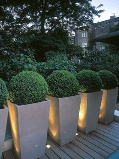 An example of using containers to create a typical hedge. Instead of plantings these boxwood straight in the ground, they are higher up to block views, and can be moved if necessary.""