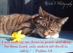 Psalms. HolyBible. NatalieVPhotography. Bible Verses of Encouragement. Find my page on Facebook. Lay Me Down, Encouraging Bible Verses, Psalms, Encouragement, Peace, Facebook, Room