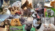 Cat Collage | Cat Collage