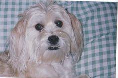 Carter Dogs, Animals, Animales, Animaux, Pet Dogs, Doggies, Animal, Animais