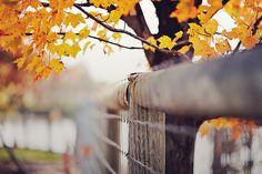 Golden drape | Flickr - Photo Sharing!
